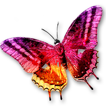 Blog 3 Transparent Butterly Final Rev 216x216 Reverse with Shadow